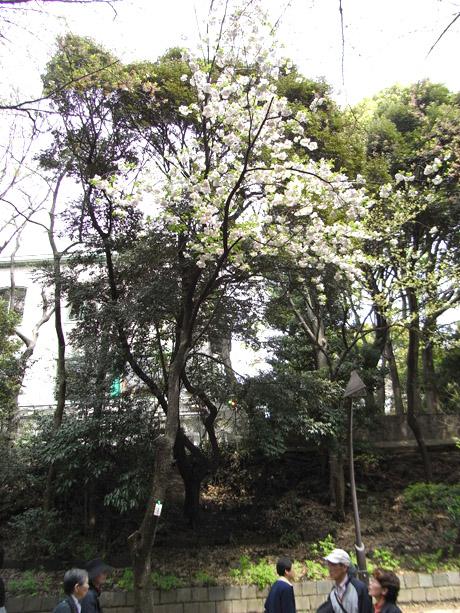 20080412_005.jpg