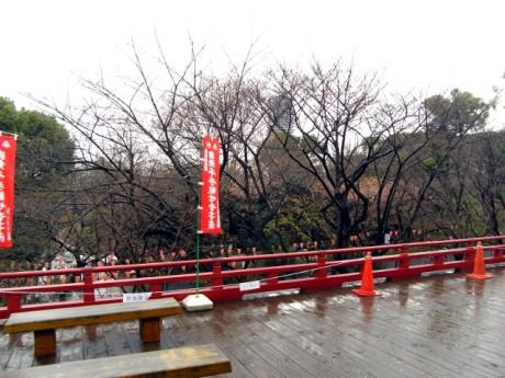 090320-ueno1