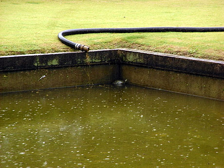 池の端に避難中のカメ