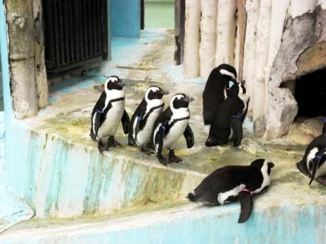 ペンギンも一列にならんで…風をよけているの?