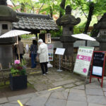 上野東照宮にて4/10(土)より『春のぼたん祭』が開催中。 上野公園 美術館・博物館 混雑情報他